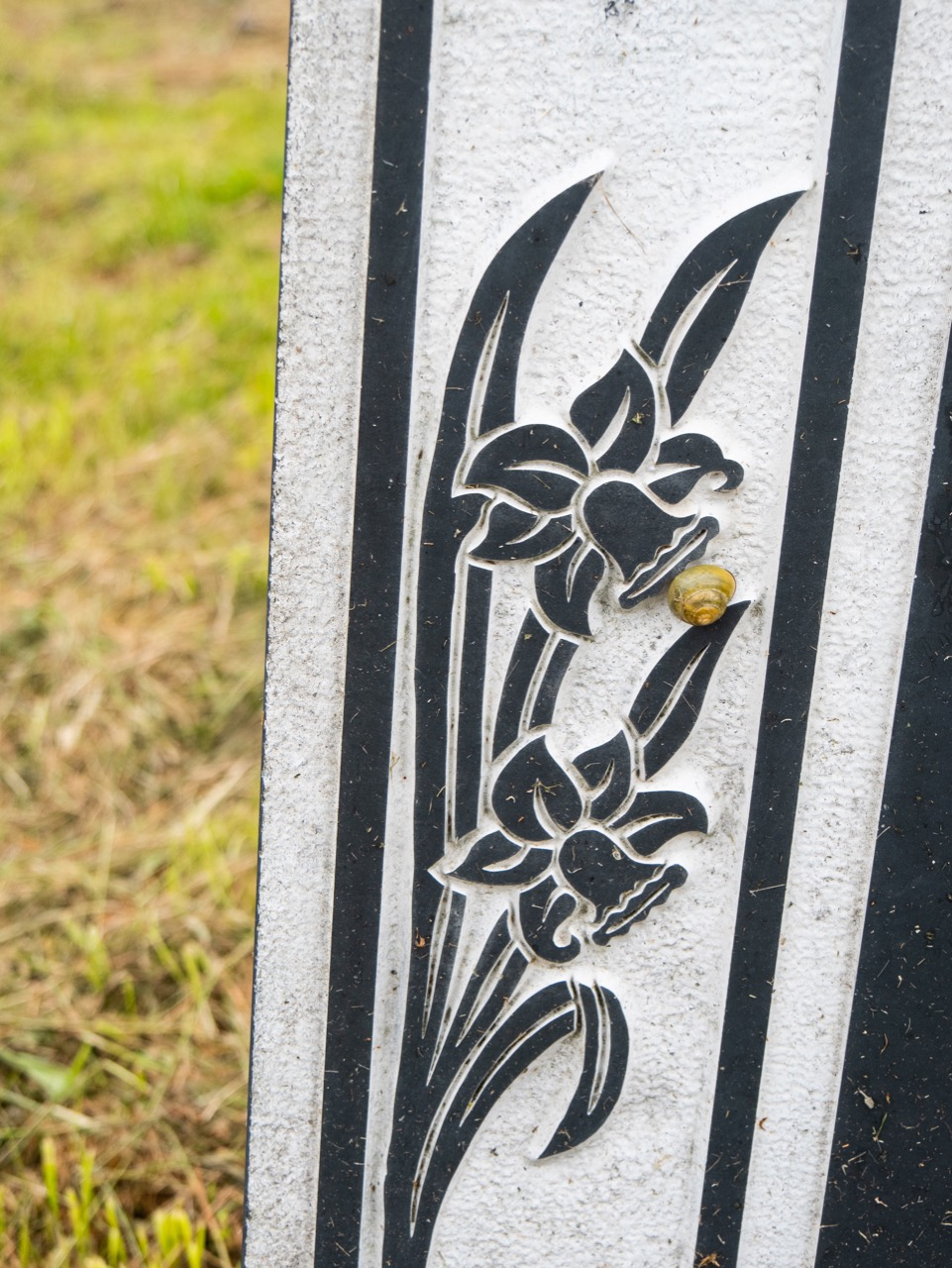 Daffodils (and a snail) on a tombstone